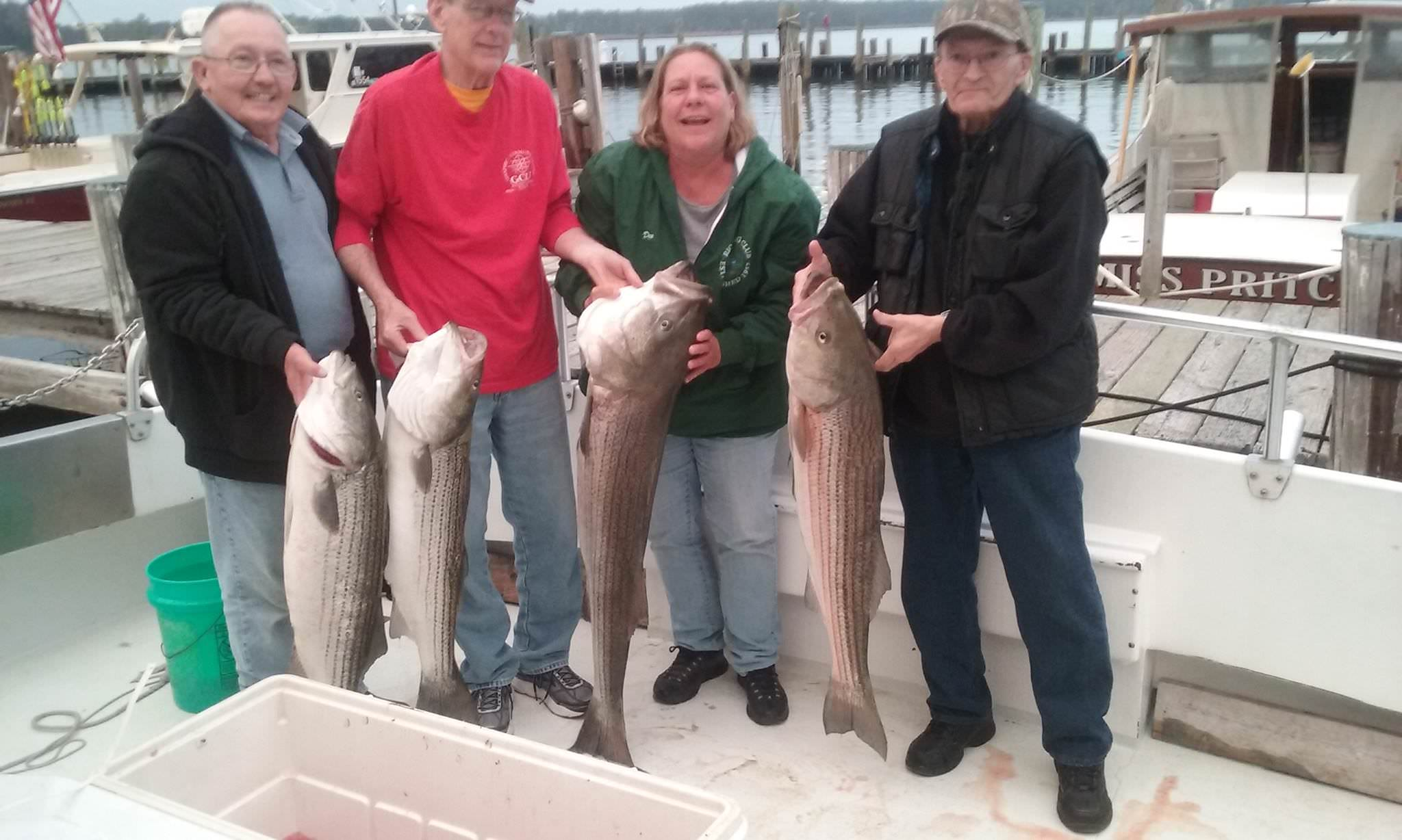 Four BIG Maryland Rockfish!
