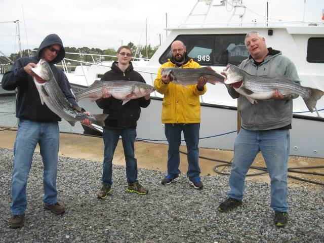 A Full Limit Of Rockfish By 7am! Maryland Chesapeake Bay Fishing Charters