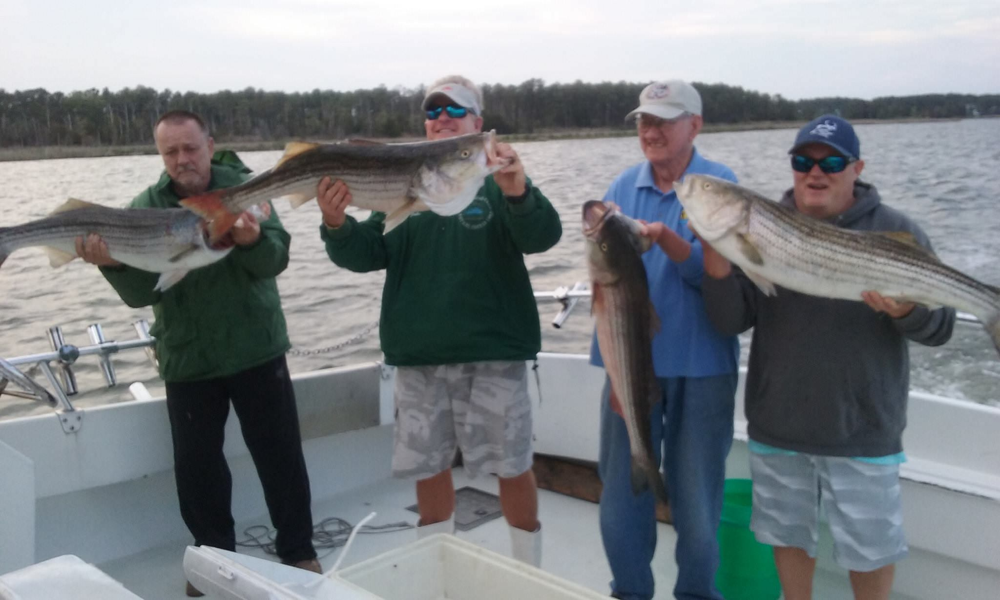 Four More Trophy Maryland Rockfish!