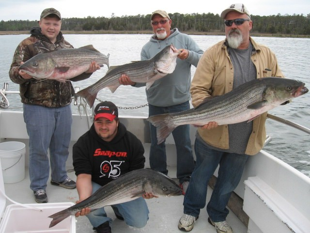 Maryland Rockfish Charters From The Eastern Shore! Maryland Chesapeake Bay Fishing Charters