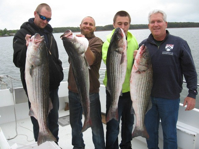 BIG Chesapeake Bay Striped Bass From Maryland's Eastern Shore! - Maryland Chesapeake Bay Fishing Charters